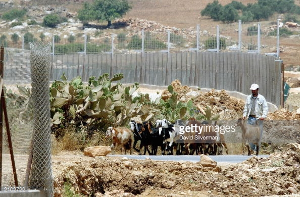 a-palestinian-man-herds-his-goats-through-an-unfinished-section-of-israels-electrified-separation-fence-june-22-2003-near-the-west-bank