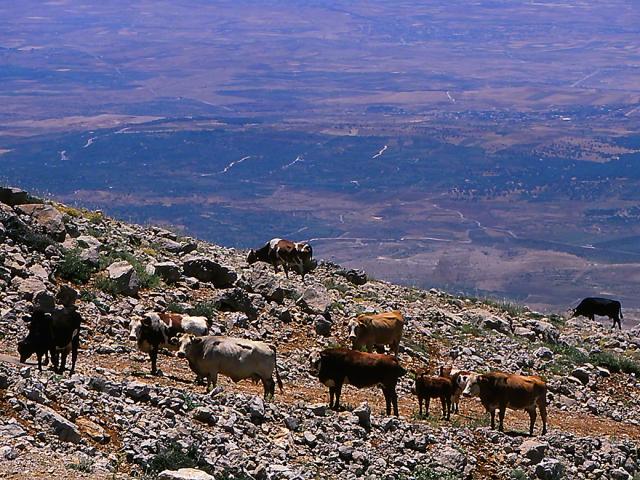 Golan Heights-Mount Hermon