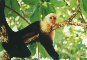 COSTA RICA carablanco_descanso_large