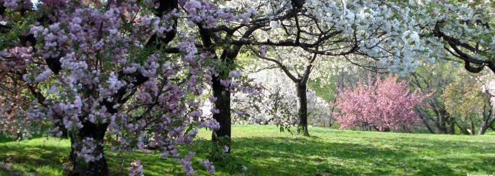 Appian Way Park
