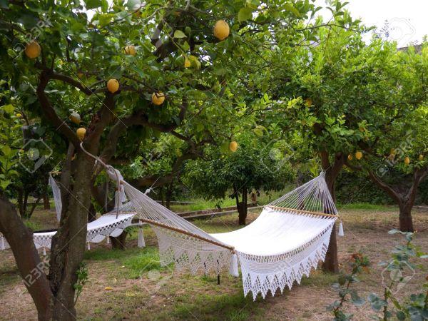 Anacapri lemon grove