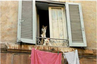 icat photo rome