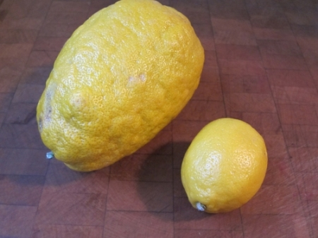 Sicilian lemon v the rest of the world