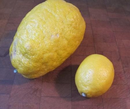 Sicilian lemon v the rest of the world