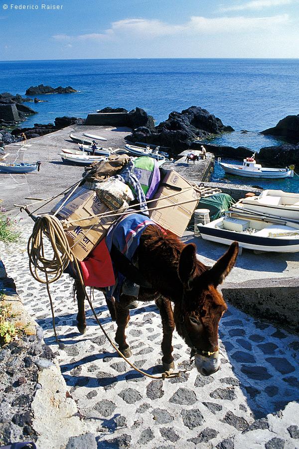 Stromboli-10 donkey
